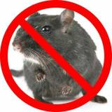 Rodent Control Melbourne Pest Control Melbourne Directory listings — The Free Pest Control Melbourne Business Directory listings  logo